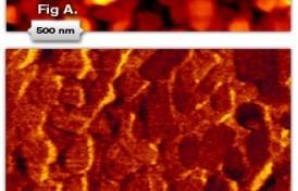 iotm-october-2007